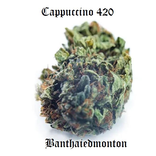 Cappuccino 420
