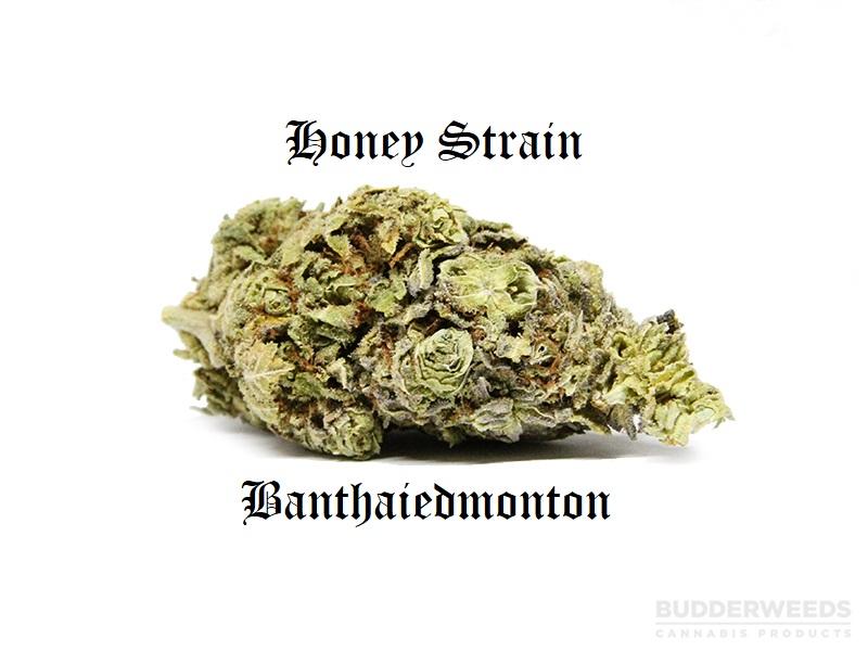 honey strain