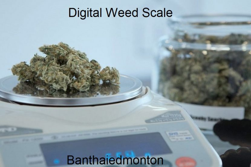 Digital Weed Scale
